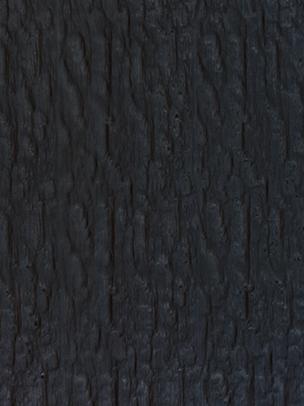 Smooth Bark Black