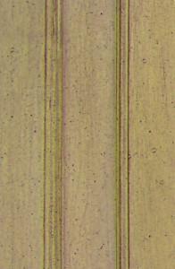 Maple - Cardamon